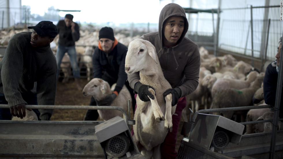 A man loads a sheep in a slaughterhouse in La Courneuve, France, on Friday.