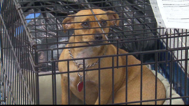 People, pets evacuate ahead of hurricane