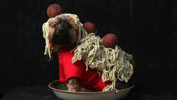 Yorkshire terrier Baxter poses as spaghetti and meatballs at the Tompkins Square Halloween Dog Parade on October 20, 2012 in New York City.