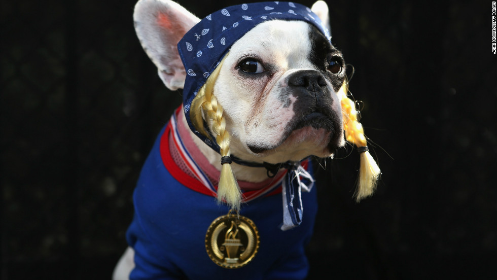 French Bulldog Lula poses as the Olympic Team USA at the Tompkins Square Halloween Dog Parade on October 20, 2012 in New York City.