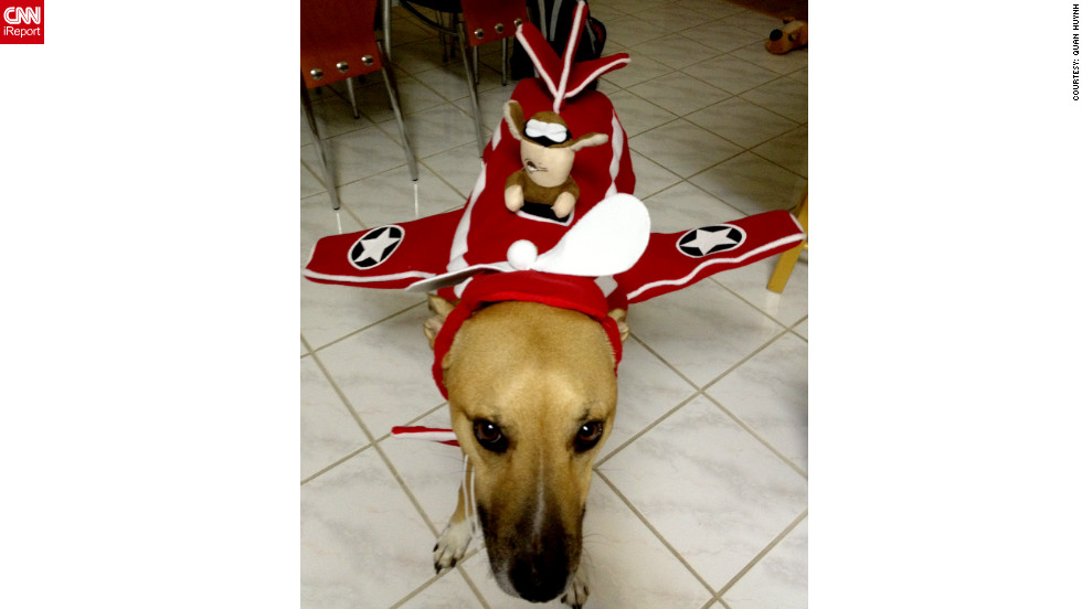 "Rocky is Quan Huynh's first dog. The 37-year-old equity trader adopted Rocky as a puppy back in 2009 from the Helen Woodward Shelter in Rancho Santa Fe, California. Not only has the lucky mutt found a loving home at Ms Huynh's, he also gets to dress up for Halloween every year. ""I bought the outfit at Target. I saw it in the weekly ad and thought it was so cute. He doesn't like wearing outfits when he's home, but as long as he is around other dogs, he doesn't mind at all. He actually played a lot with my friend's dogs who were also at the Humane Society event and the plane outfit looked like a plane wreck, wings twisted and dangling."" This was Rocky's and Ms <a href=""http://ireport.cnn.com/docs/DOC-865334"" target=""_blank"">Huynh's first-ever iReport.</a>"