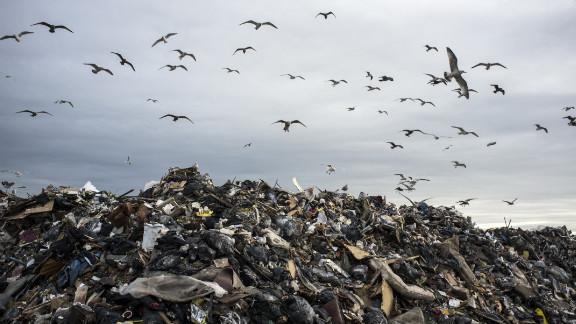 Seagulls seek food at in remnants of Rockaway Beach homes.