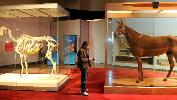Phar Lap is immortalized in the Melbourne Museum. The New Zealand-born champion gelding