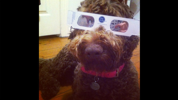 Vanessa Hill of North Ryde, near Sydney, was taking no precautions during this morning's eclipse, adorning her dog with cool protective shades.