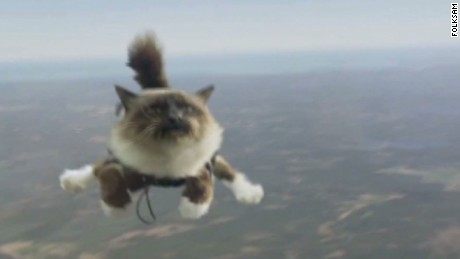 tsr moos skydiving cats controversy_00001819