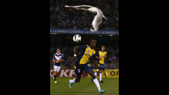 Bernie Ibini of the Mariners competes for the ball during the round seven A-League match between the Melbourne Victory and the Central Coast Mariners on November 17 in Melbourne, Australia.