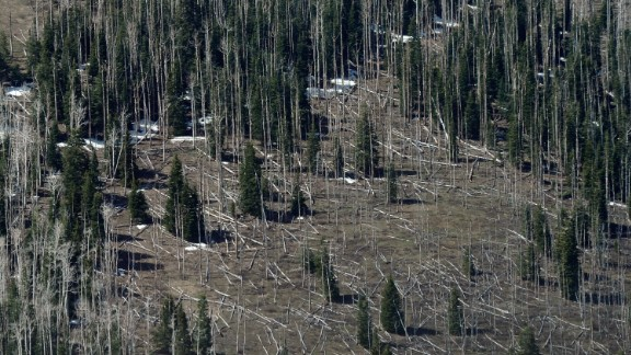 Drought leaves trees more susceptible to disease, like these pines trees near Strawberry Valley in Utah. In the U.S., millions of acres of forest have been damaged by beetles, according to a report by the U.S. Global Change Research Program. Less severe winters and longer summers are allowing beetles to thrive.