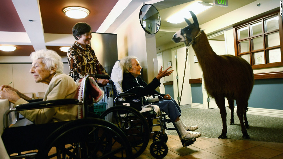 Terminally ill patients at a hospice in Colorado enjoy the company of a visiting llama, used to boost morale and wellbeing.