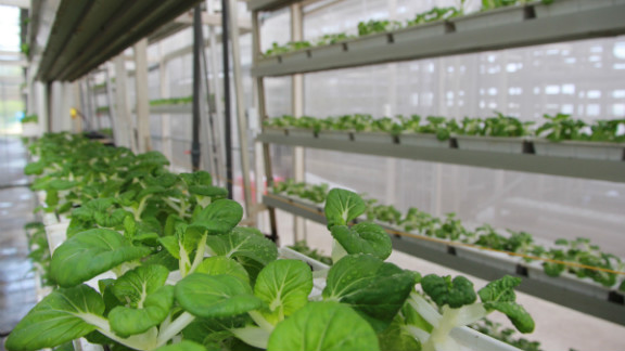Vertical farms were conceptualized in the 1950s, but Singapore's Sky Greens is the first commercial farm in the country with big ideas to expand.