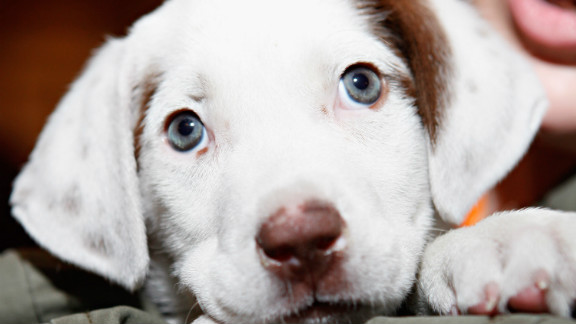 Stressed out at college? Puppies. Out of salsa? Puppies. See? All better.
