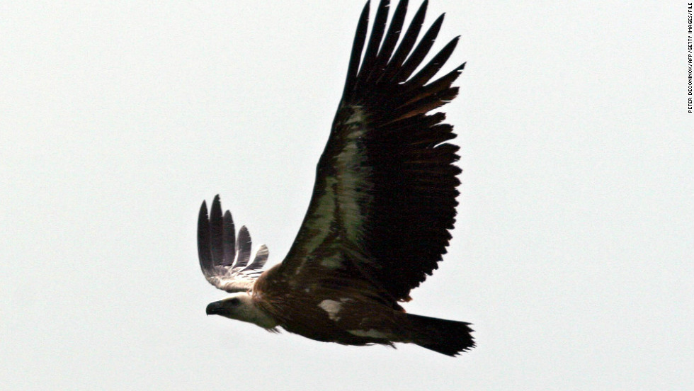 One of the Israeli ecologists tracking the vultures has rejected the claims, saying the GPS tracking is merely for researching the bird's movements.