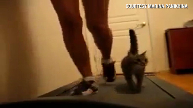 orig distraction cat on treadmill_00005509