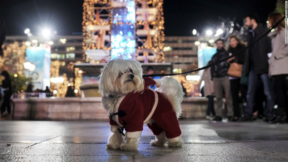 A  dog dressed up for the season is out and about at the annual Christmas illumination of Syntagma Square in Athens, Greece, on December 11. <br />
