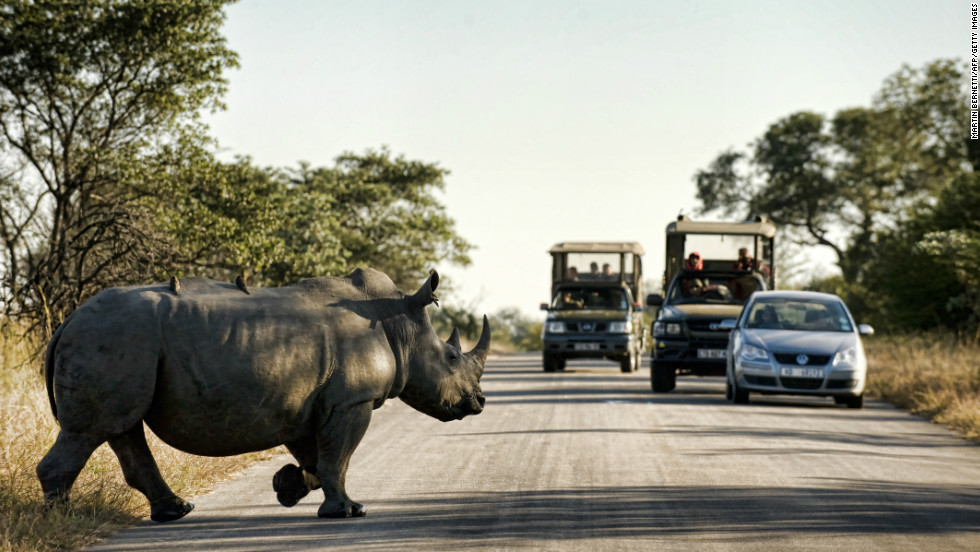 "More than 1,200 rhinos were illegally killed in South Africa in 2014 -- <a href=""http://news.nationalgeographic.com/news/2015/01/150122-rhino-poaching-south-africa-conservation-science/"" target=""_blank"">an increase of 20% on the previous year</a>, and the highest total since records began."