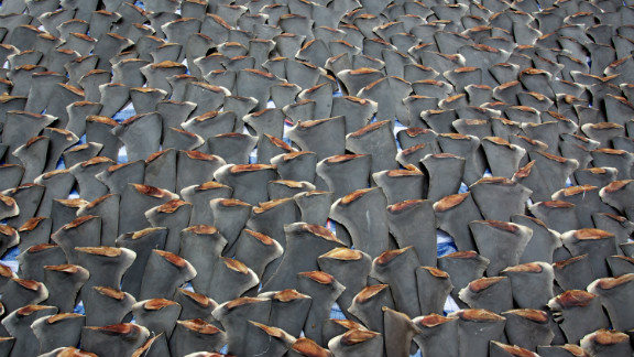 Shark finning is banned in several countries, but the trade is flourishing in Hong Kong, where the fins are used in shark fin soup, a dish considered a prestigious delicacy, and in some types of traditional Chinese medicine. Hong Kong accounts for 50% of the global shark fin trade, according to the WWF.