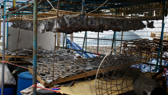 Shark fins used to be laid out to dry openly on ground level in Hong Kong, but finding another place to dry them -- out of sight of the public --might be a way for shark fin traders to avoid criticism.