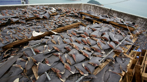 Many restaurants and hotels in Hong Kong have chosen not to serve shark fin soup, and last year a Chinese State Council said they are planning to ban shark fin soup from being served at official banquets in China.