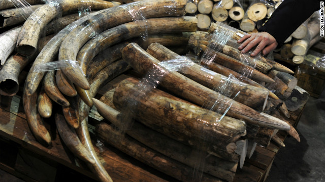 Asian demand spurs ivory poaching