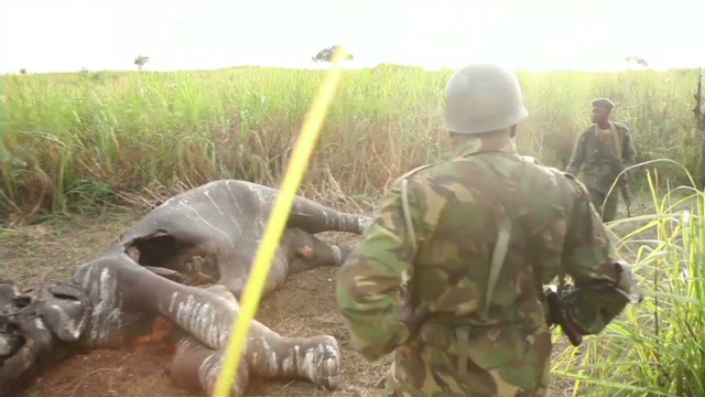 Elephants slaughtered from the sky