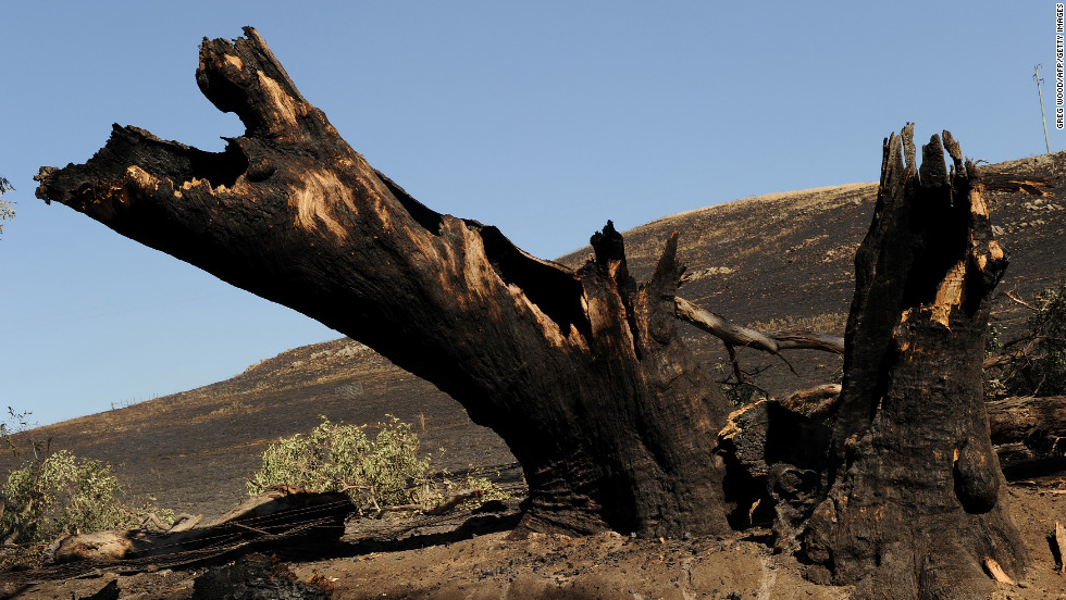 Fire leaves a tree and paddock blackened near Bookham on Thursday, January 10.