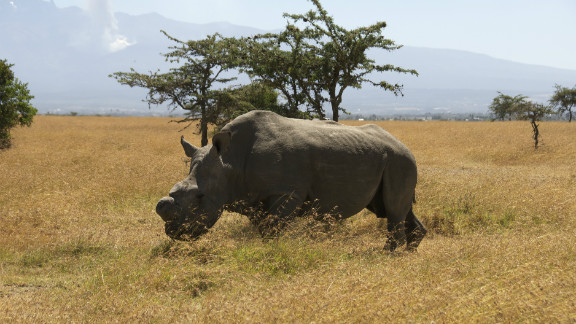 Rhino poaching rates have soared in recent years in parts of Africa amid growing demand in southeast Asia for the animals