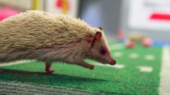 Hedgehog cheerleaders root for the puppies from the sidelines.