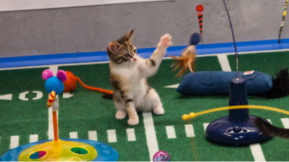 The kitty halftime show makes use of the latest cat toys.