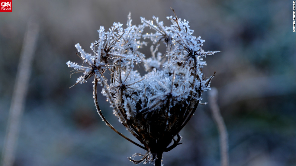 "One freezing morning changes everything. Krishna Sharma <a href=""http://ireport.cnn.com/docs/DOC-917975"">shared this photo</a> and others from the grassy patch next to her office parking lot. Normally, he says, the plants look ""very ordinary,"" but a frost ""illuminates some of the intricate details"" of even the smallest leaf."