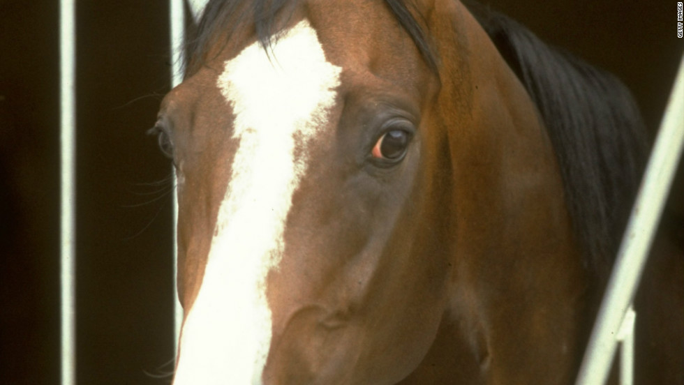 """He was one of those no-nonsense horses, nothing fazed him,"" Swinburn said of the colt with the distinctive white blaze on his face and four white 'socks.'"