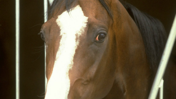 """""""He was one of those no-nonsense horses, nothing fazed him,"""" Swinburn said of the colt with the distinctive white blaze on his face and four white 'socks.'"""