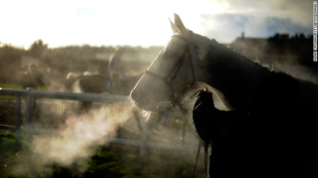 (File photo) A horse breathes heavily after finishing a race on February 10, 2013 in Exeter, England.