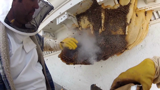 dnt bee colony removed from local news station _00001901.jpg