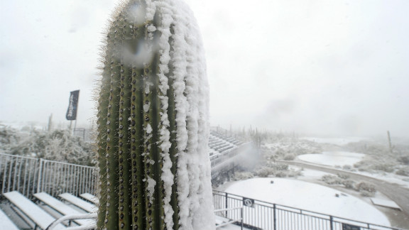 Snow covers this cactus during the first round of the World Golf Championships at the Golf Club at Dove Mountain in Marana, Arizona, on February 20.