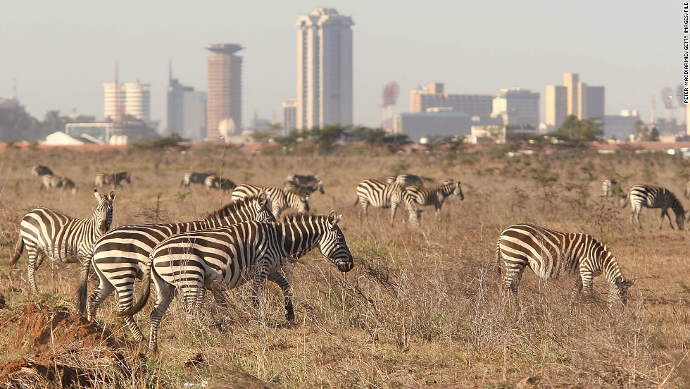 Nairobi is the world's only capital city with a national park, where wildlife roams free against the urban backdrop of skyscrapers.