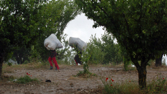 Displaced Syrian refugees walk through an orchard adjacent to Syria