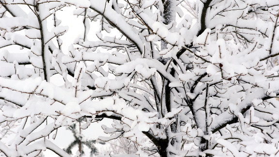 Tree branches are covered in snow on February 26 in Kansas City, Missouri.