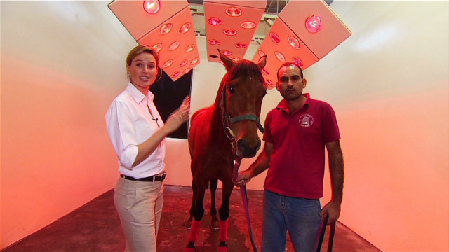6 star luxury for Qatar race horses