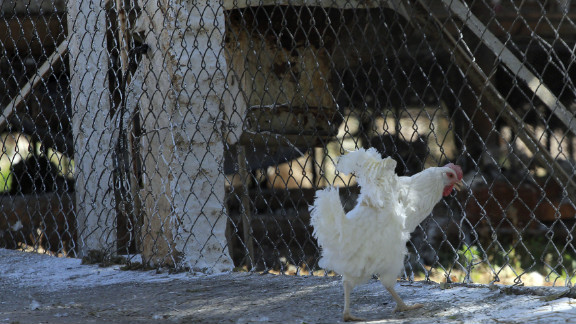 Bird flu has been discovered in 18 farms in the central Mexican state of Guanajuato, Mexico's Agriculture Ministry said.
