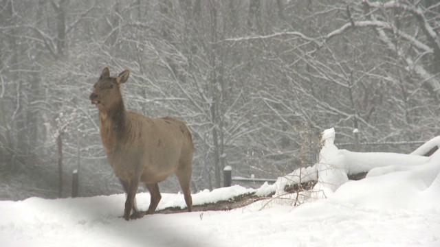 Zoo animals, workers deal with snow