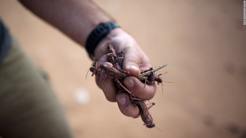 A man clutches a handful of locusts in Kmehin on Wednesday.