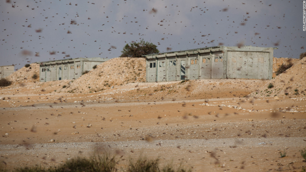 The insects move over an Israeli army firing range in Kmehin on Wednesday.