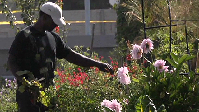Gangsta gardener of South Central L.A.