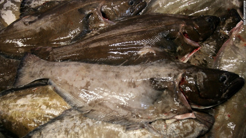 Overfishing has been going on for decades, say marine scientists. Tens of thousands of bluefin tuna were caught every year in the North Sea in the 1930s and 1940s. Today, they have disappeared across the seas of Northern Europe. Halibut (pictured) has suffered a similar fate, largely vanishing from the North Atlantic in the 19th century.<br />