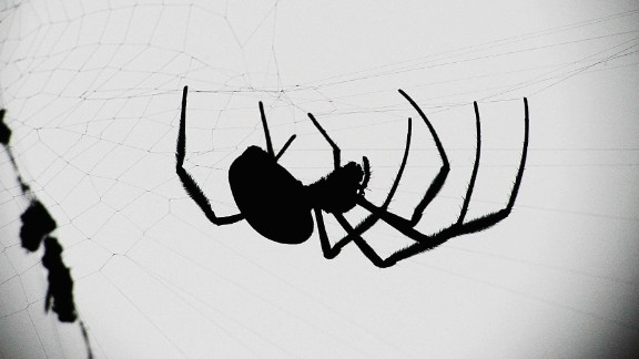 Spiders are also associated with Halloween imagery, thanks in part to their historic association with ancient religions. The myths surrounding gods and supernatural beings who can predict the future or plot fate are often associated with spinning, thread, weaving and spider webs. But after all, spiders can be scary -- some bite! -- and spooky imagery is part of the Halloween tradition.