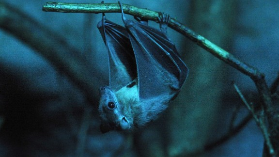 Bats are an unmistakable hallmark of Halloween. An ancient tradition associated with the holiday is the nighttime bonfire, which lit up the night sky. Bats don't have ancient associations with Halloween, but the night sky does -- and that's often where bats can be seen.