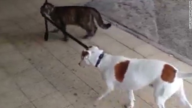 Cat And Dog Story