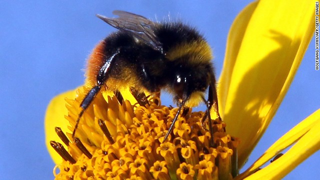 2008: Why are the honeybees dying?