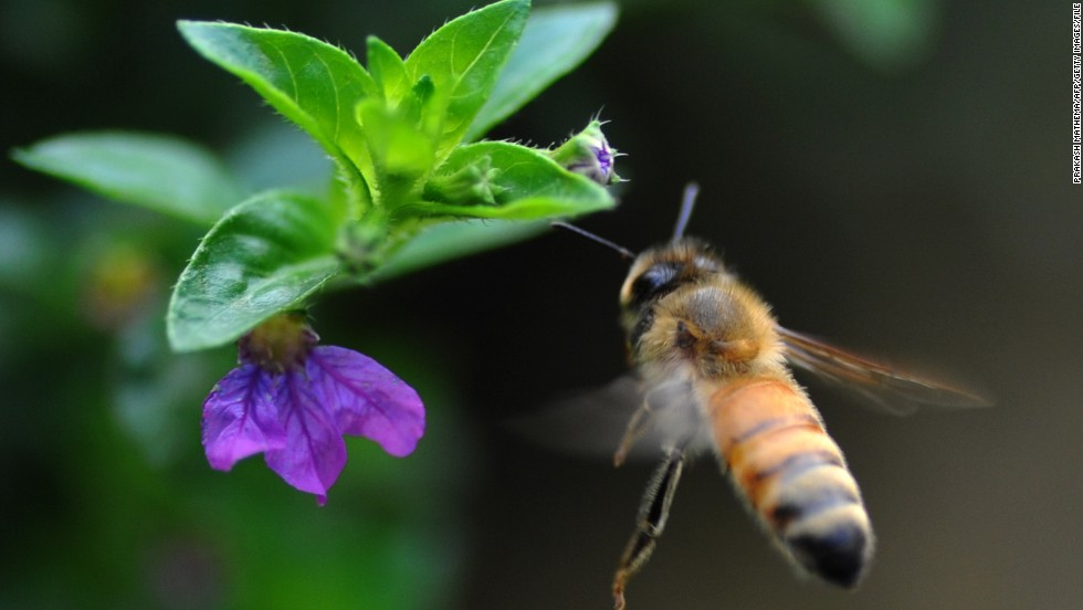 Seven simple things you can do to save the bees on National Honeybee Day