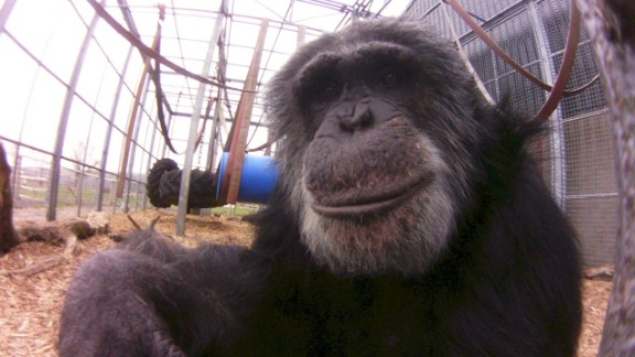 """A posing primate as captured with the Little Cyclops camera. Dash raised the money for producing the camera through crowd-funding website <a href=""""http://www.indiegogo.com/projects/world-s-first-digital-lofi-fisheye"""" target=""""_blank"""" target=""""_blank"""">Indiegogo</a>. Only 1,000 will be made in the first run and sold for a price of $100 each."""