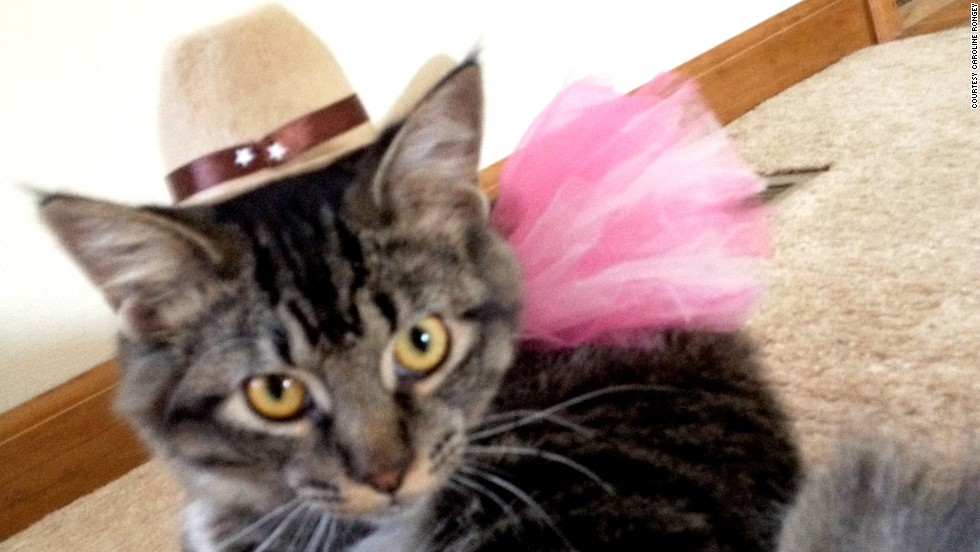 Caroline Rongey from Collinsville, Illinois, lets her cat Steve eat his dinner at the table and dresses him up on holidays.